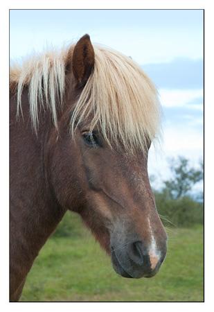 caballo2web-Edit