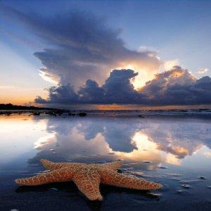 Estrella+de+mar